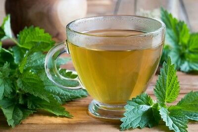 Nettles - grow this valuable herb on your own; stinging - - 700 seeds