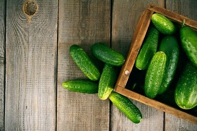 "Cucumber ""Grot"" - for pickles - 105 seeds"