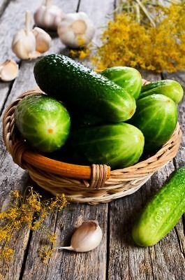 "Cucumber ""Odys F1"" - for pickles - 110 seeds"