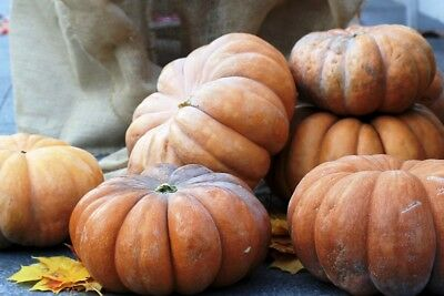 "Musk squash ""Muscade de Provence"" - with very aromatic fruit - 18 seeds"