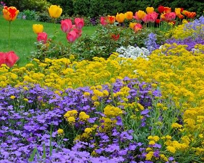 Spring Perennial Mix seeds