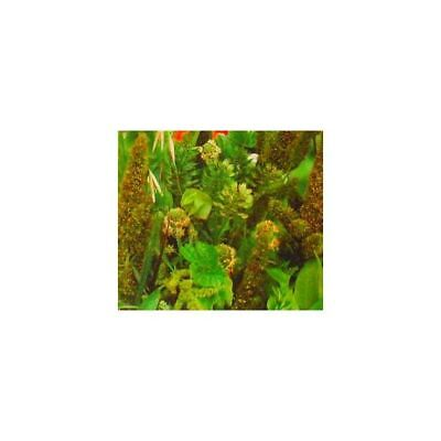 Green Plants mixed  - 90 seeds