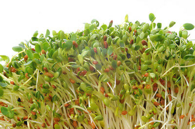 French Sprout mix  - seeds
