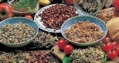 Sprouts that strengthen the immune system  - seeds