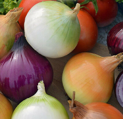 Onion variety mix - SEED TAPE  - seeds