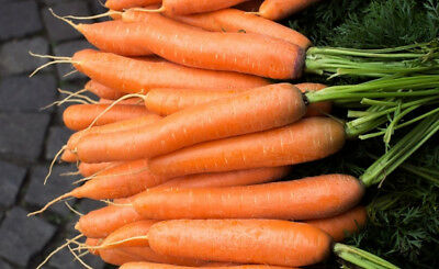 """Carrot """"Nantes 3"""" - medium early variety - SEED TAPE  - seeds"""