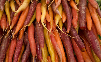 Carrot multicolour variety mix - SEED TAPE  - seeds