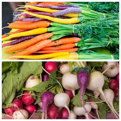 2 in 1 - Multicolour carrot and multicolour radish - SEED TAPE  - seeds