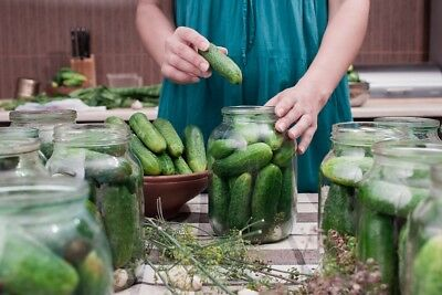 "Pickling cucumber ""Octopus"" - seed tape  - seeds"