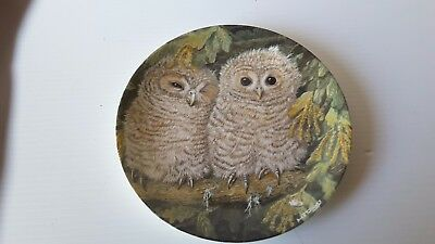 Crown Staffordshire  TAWNY Owl Chicks collector Plate DICK TWINNEY  WEDGWOOD