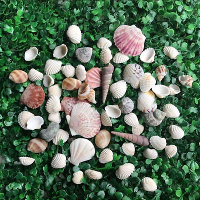 HAKACC Sea Shell Assortment, Sea Shells with Jar Mixed Natural Beach Decorative