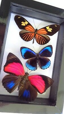 "3 Real Framed Butterflies Size 4.5""x6.5""inches Double Glass"" Special Butterfly"""