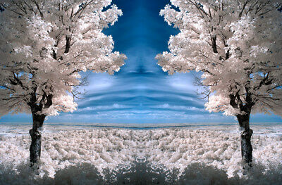 Photo, digital picture free worldwide email delivery , infrared Lehi's dream