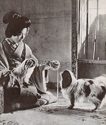 DOG Japanese Chin & Woman in Kimono Japan, Vintage Print 1930s