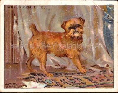 DOG Brussels Griffon, Antique 1915 Trading Card