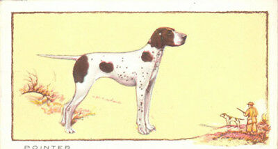 DOG English Pointer Named Identified Champion, Color Trading Card, 1934