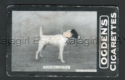DOG Fox Terrier (Named), 1902 Photo Trading Card 3