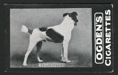 DOG Fox Terrier (Named), 1902 Photo Trading Card 4