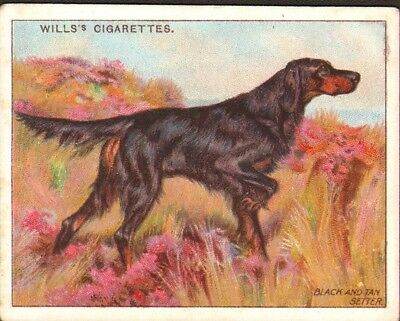 DOG Gordon Setter (Black & Tan Setter), Antique 1914 Trading Card