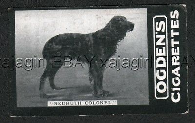 DOG Gordon Setter Champ (Named) Photo Trading Card 1902