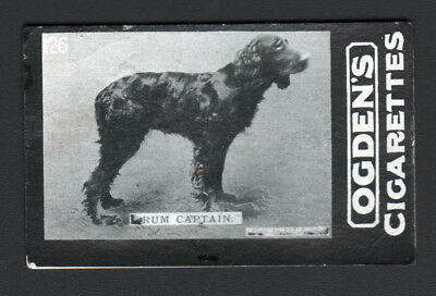DOG Gordon Setter Champ, Photo Trading Card 100 Yrs Old
