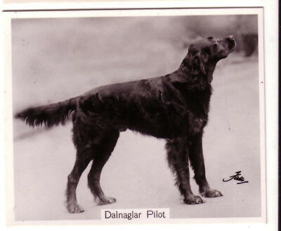 DOG Gordon Setter Named, Large Photo Trading Card, 1938