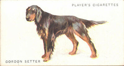 DOG Gordon Setter, Nice Breed Trading Card, 1931