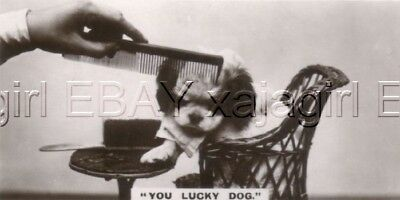DOG Japanese Chin Puppy, Trading Card, Real Photo 1930s