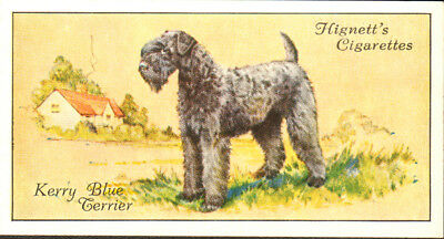 DOG Kerry Blue Terrier, Small British Trading Card 1936