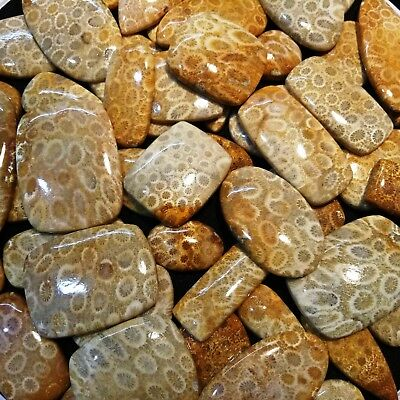 Indonesian Fossil Coral 100 % Natural Excellent Quality Wholesale Lot Gem Video