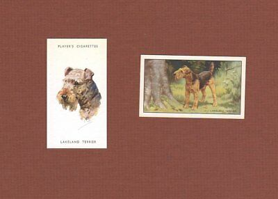 Lakeland Terrier dog cigarette trade cards set of 2