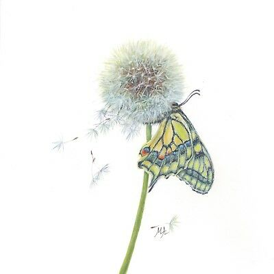 """ORIGINAL Watercolour Painting 8""""x8"""" - Butterfly and Dandelion by Mila Ansell"""