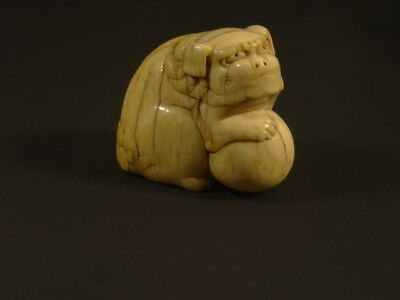 Important Early 18th Century Edo Japanese Netsuke Shishi