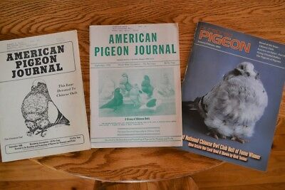 American pigeon journal and Purebred Pigeon Journal Chinese owl specials