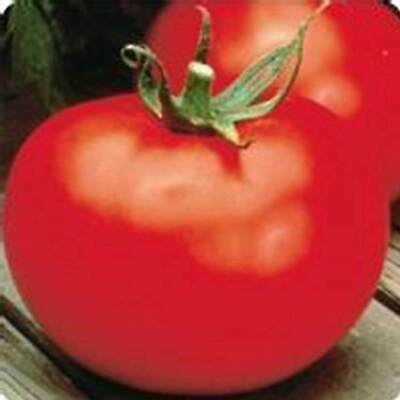 Tomato Garden Seeds - Better Boy Hybrid - 10 Seed Packet - Non-Gmo, Vegetable