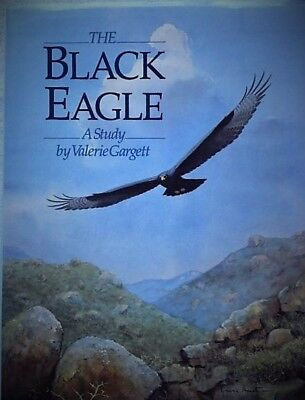 The Black Eagle: A Study by Valerie Gargett
