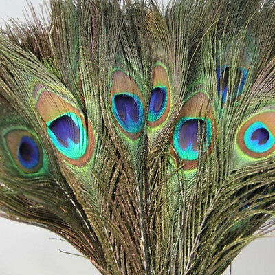 "10Pcs Beautiful Peacock Tail Eyes Feather 10-12"" DIY Home Crafts Art Decoration"