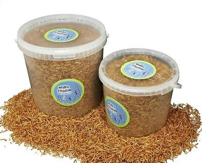 High Protein Quality Dried Mealworms Wild Bird Food Feed Birds Feeding Buckets