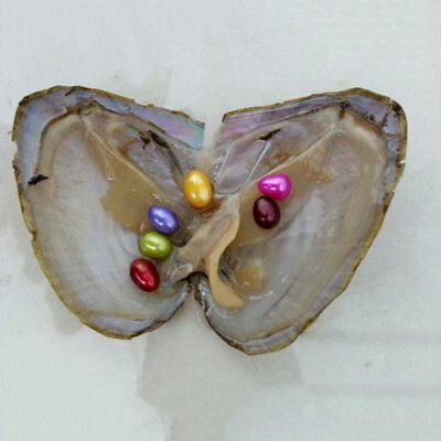 Vacuum-pack Oyster Pearls Mussel Shell with 6x Pearls Inside Freshwater Pearl C6