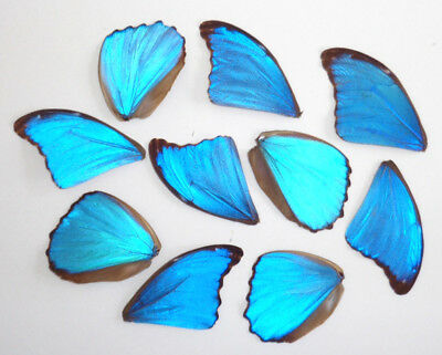 Lot 10 Wings Of Blue Morpho Didius For Art Work Of Earrings Necklaces Jewelry