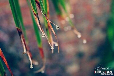Digital Picture/photo/image/wallpaper/desktop Jpeg-Rain Drops