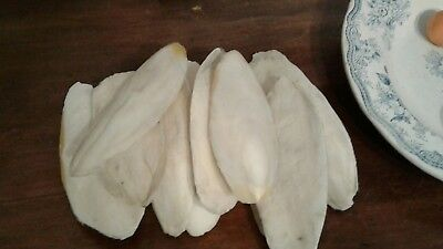 1 kg lot of100%natural Cuttlefish bone hand picked from Welsh beaches