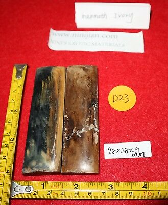 D23 Pleistocene FOSSIL bark TEETH  KNIFE SCALE PISTOL GRIP cm mammoth hair