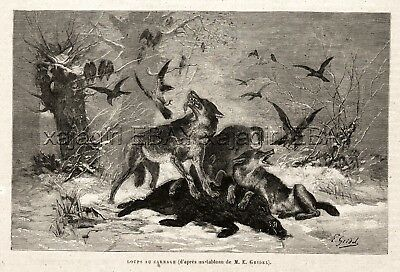Wolf Pack Kills Wild Boar, Hassled by Crows Winter 1880s Antique Print & Article