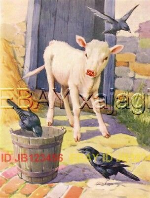 COW White Calf, Birds Steal Food, Cute 1940s Art Print