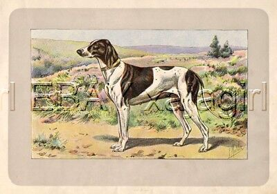 DOG French Pointer (Braque), Rare Antique 100-Year-Old French Dog Print