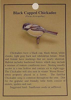 Hat Pin Lapel Pins Black Capped Chickadee  Free Shipping