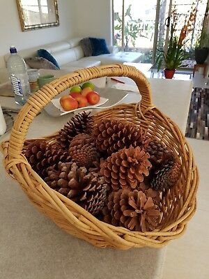 Pine Cones Large x 4 natural for Craft  xmas and table decoration painting # 03