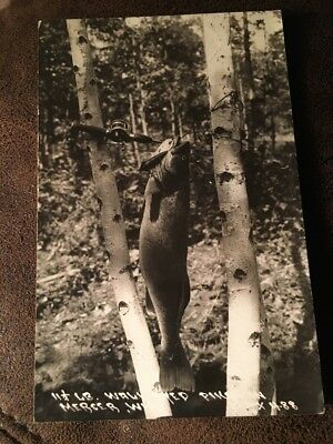 Mercer WI 11.5lb Walleyed Pike Fishing Wisconsin Real Photo Postcard