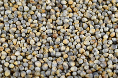 950g Bajra Grain Kambhu Pearl Millet Whole Grain - High Quality